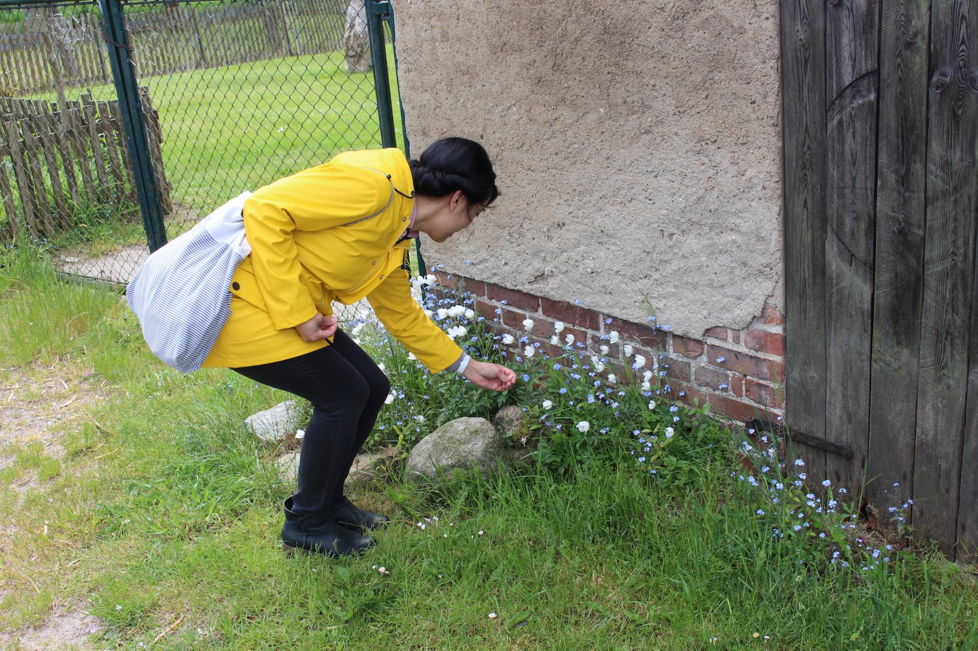 Insel Rügen Blumen pflücken